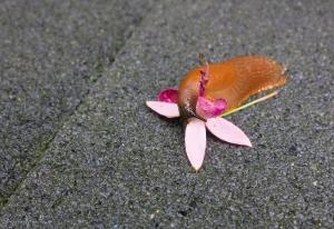 Nacktschnecke auf Blume