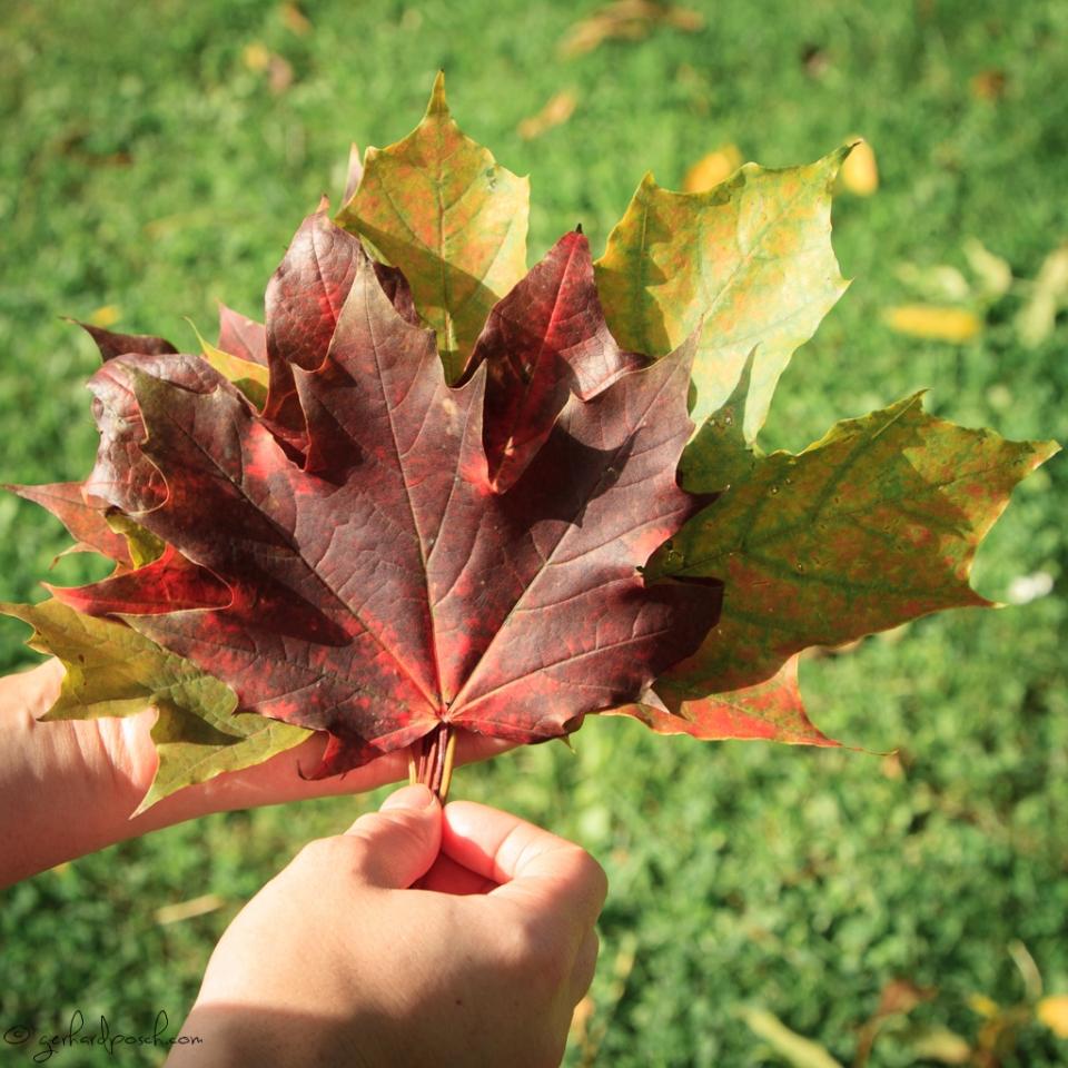 Blätter in Herbstfarben