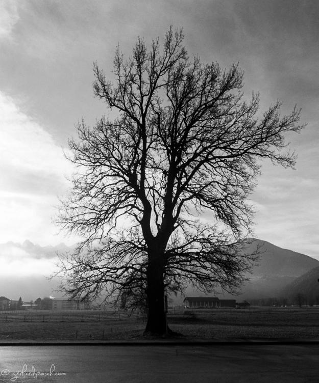 Baum beim Sportplatz