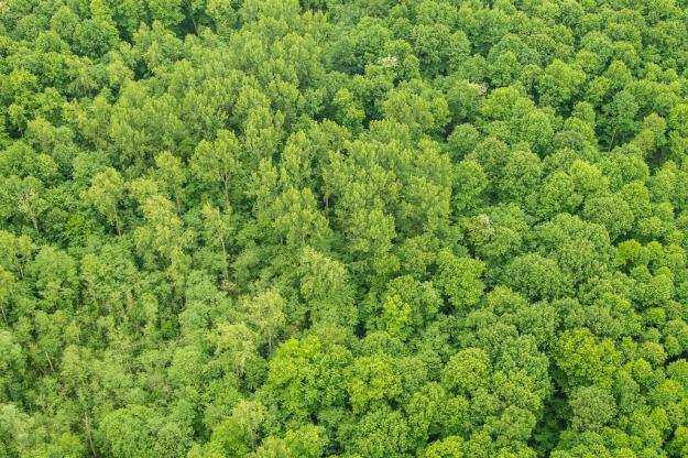 Wald Textur